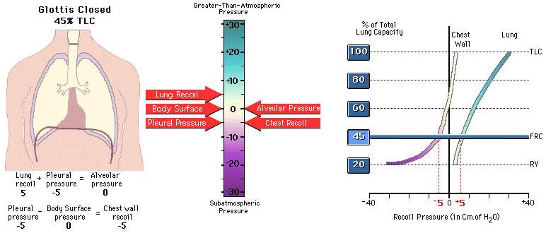 AP Statistics Tutorial